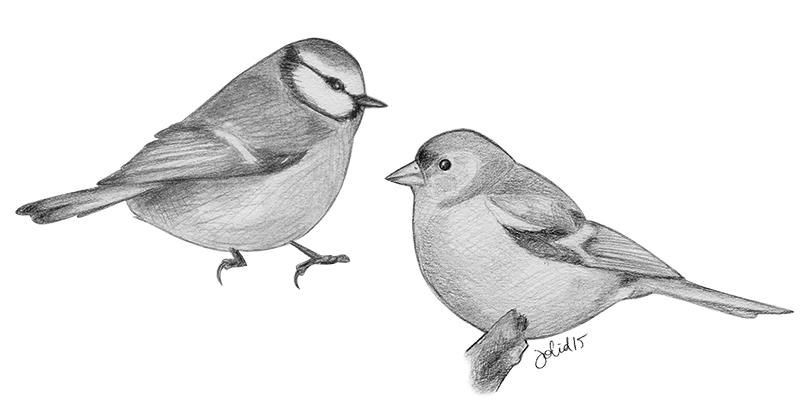 fåglar1